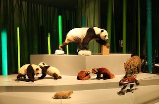 """""""成都大熊猫博物馆""""开启内部试运行,首批市民……"""