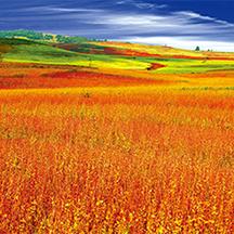 盐边县格萨拉日都尼西草原
