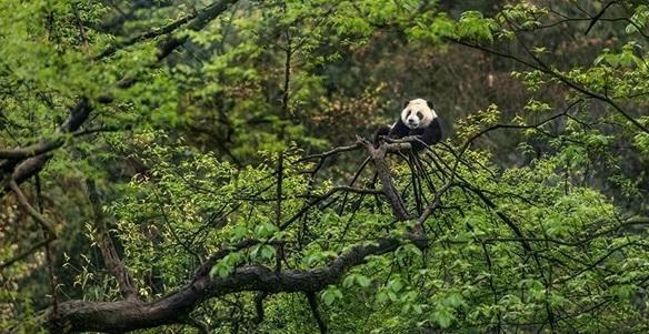 四川省林草局:巡护发现火情怎么办?向这位护林员学习!