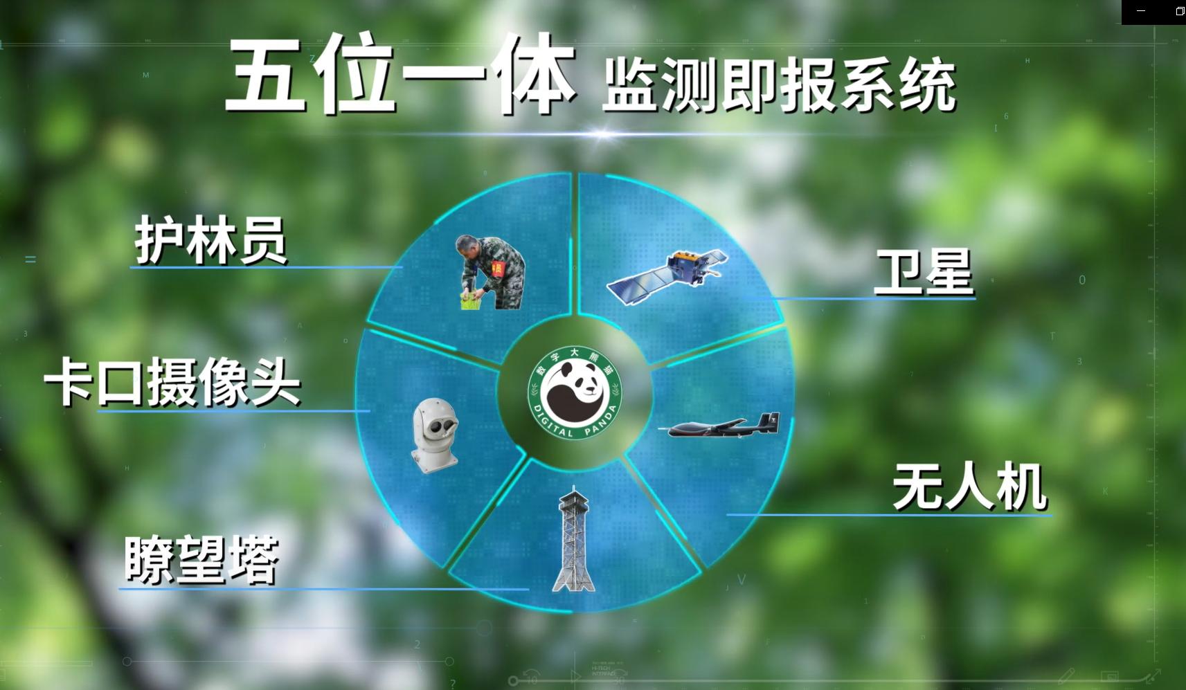数字熊猫监测即报系统