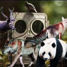 四川省林业和草原局关于举办红外触发相机摄影比赛的通知