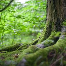 四川省林业和草原局关于 开展2021最受欢迎自然教育导师评选的通知